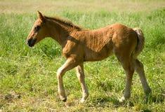 hästbarn royaltyfri foto