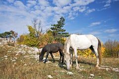 hästbergplatå Royaltyfri Bild