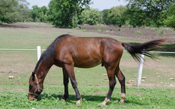 Hästbetesmark Royaltyfri Bild