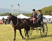 hästblockering Royaltyfria Foton