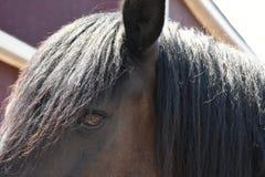 Hästcloseupöga och man arkivfoton
