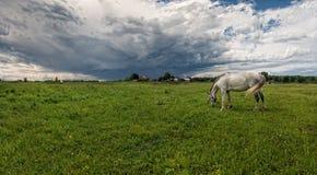 Hästcloseup av en gå i ängen i dimman arkivfoton