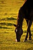 Hästdetalj Fotografering för Bildbyråer