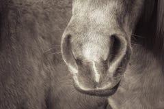 Hästdetalj 188 Royaltyfria Bilder