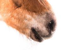 Hästdetalj (148), näsnärbild Arkivbilder