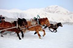 Hästdragen slädematch Royaltyfria Bilder