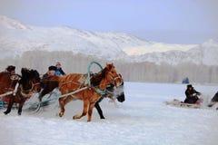 Hästdragen slädematch Arkivfoton