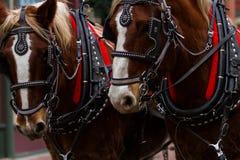 Hästdragen vagnritt Arkivfoton