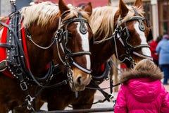 Hästdragen vagnritt Arkivfoto
