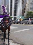 Hästdragna vagnar, bärande skygglappar för häst och Plume Feather, Midtown, Manhattan, NYC, NY, USA Royaltyfria Bilder