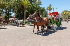 Hästdragna vagnar i Marrakech, Marocko Arkivfoton