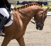 Hästdressageshow Royaltyfri Fotografi