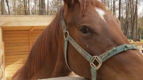 Hästen är i en kontaktzoo på våren lager videofilmer