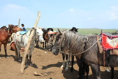 Hästen Fotografering för Bildbyråer