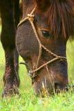 Hästen Royaltyfria Foton