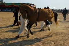Hästen Royaltyfri Foto