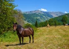 hästen betar Arkivfoto
