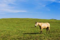 Hästen betar in Arkivbild