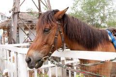 hästen blidkar avkänning Arkivfoton