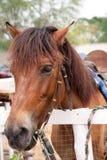 hästen blidkar avkänning Royaltyfria Foton