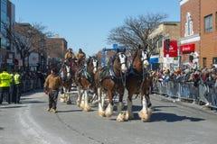Hästen drog vagnen i Sts Patrick dag ståtar Boston, USA Arkivbilder