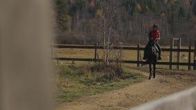 Hästen går i cirkelvägen av paddocken med den kvinnliga jockeyn på dess baksida lager videofilmer