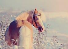 Hästen går på Arkivfoto