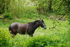 Hästen går på gräset Arkivbild