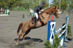 Hästen hoppar Arkivbilder