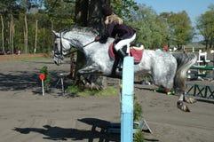 Hästen hoppar Royaltyfri Foto
