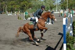 Hästen hoppar Arkivbild