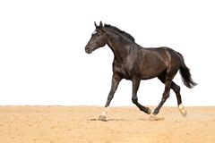 Hästen hoppar på sand på en vit bakgrund royaltyfria bilder