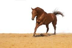 Hästen hoppar på sand på en vit bakgrund fotografering för bildbyråer