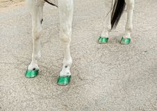 Hästen i den helgonPatricks dagen ståtar Arkivfoto