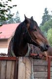 Hästen i en stall Royaltyfri Fotografi