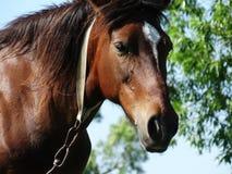 Hästen i natur arkivbilder