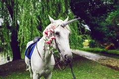 Hästen klädde som en enhörning med hornet Idéer för photoshoot bröllop deltagare utomhus- royaltyfri fotografi