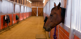 Hästen klibbar hans head ut stallpaddocken Arkivbilder