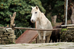 Hästen kopplar av Fotografering för Bildbyråer