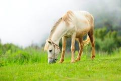 Hästen kopplar av Arkivfoton