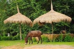 Hästen kopplar av i grässlätt Arkivbilder