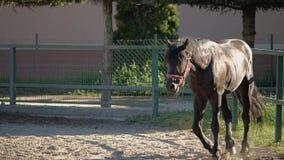 Hästen lugnar ner stock video
