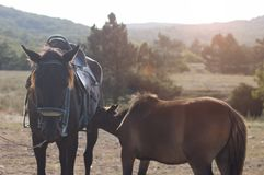 Hästen matar det lilla fölet royaltyfri bild