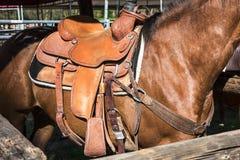 Hästen med sadeln Royaltyfri Fotografi