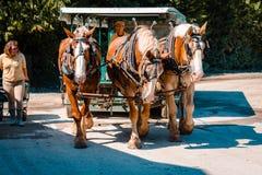 Hästen och barnvagnen turnerar på den Mackinac ön Royaltyfri Foto