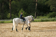 Hästen och behandla som ett barn Arkivbild