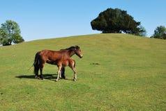 Hästen och behandla som ett barn hästen Royaltyfri Bild