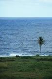 Hästen och datumet gömma i handflatan på ön av Maui, Hawaii Arkivfoto