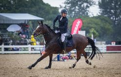 Hästen och ryttaren i handling på en häst visar royaltyfria foton