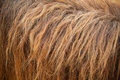 Hästen pälsfodrar Arkivfoton